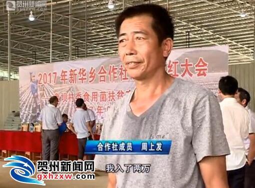 【精准脱贫】新华乡:产业扶贫见实效  贫困户喜获分红