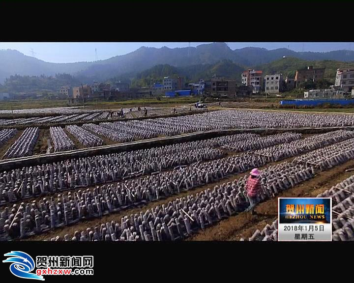 贺州现代农业发展势头强劲
