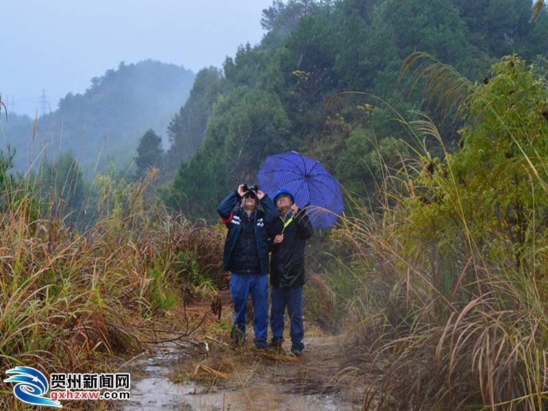 贺州供电局:低温冰冻来袭,贺州主电网安全稳定运行
