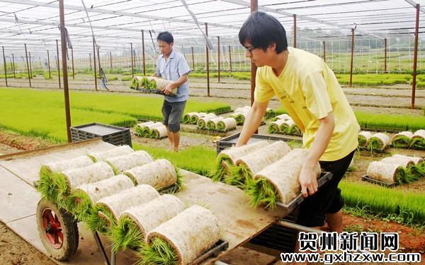 钟山首个现代农机示范园投入运行
