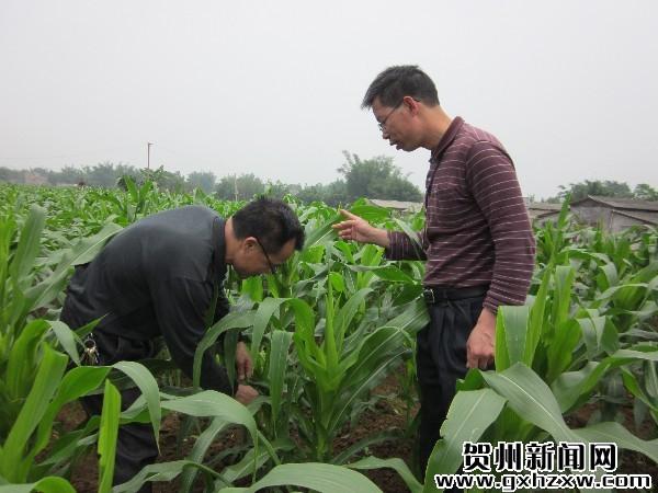 """科技特派员把关农作物""""成长"""""""