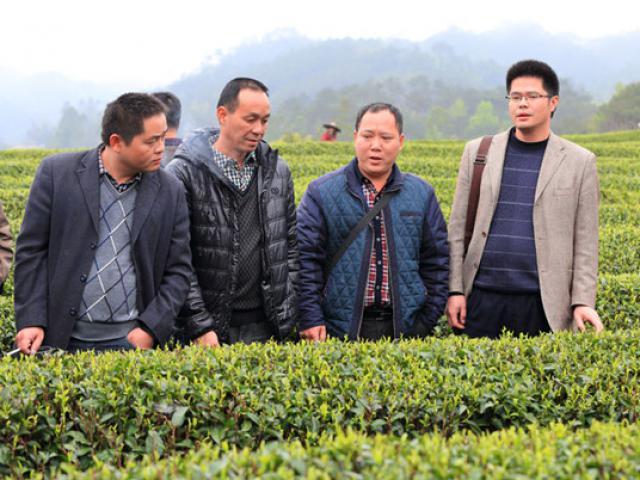 开展茶叶种植现场会 加快推进茶产业发展助扶贫