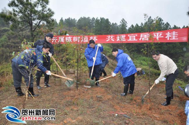 平桂管理区15722人参加义务植树