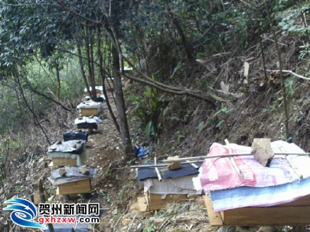 五将镇发展养蜂业拓宽脱贫致富路