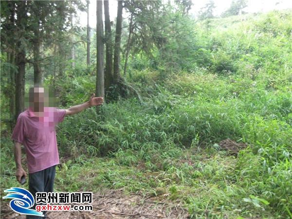 平桂森警重拳出击 一周连破两起滥伐林木案