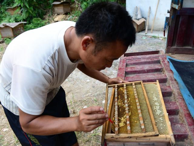 养蜂路上的脱贫梦