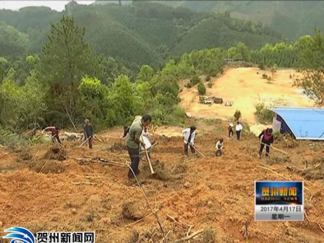 安宁村:能人带动 科学种养铺脱贫新路