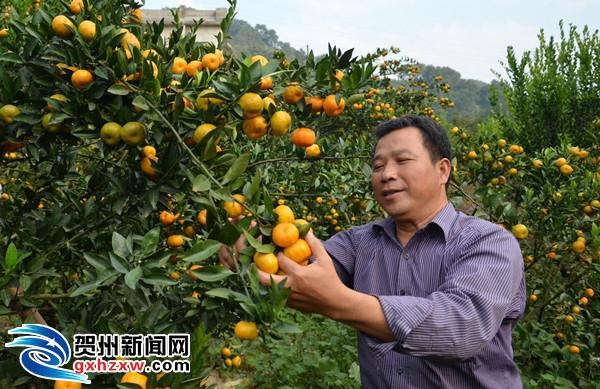 步头镇善中村大力发展特色水果产业