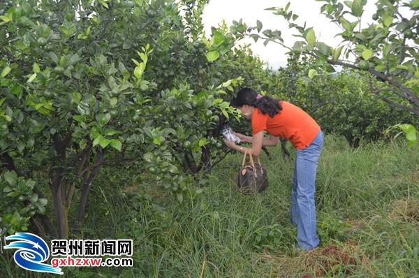 钟山县创建国家级出口食品农产品质量安全示范区工作通过初步考核验收
