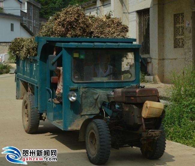 钟山县三项措施促花生增产丰收