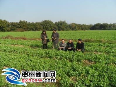 铺门福塔蔬菜基地顺利通过广西蔬菜标准园验收