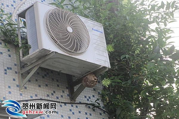 贺州消防成功处置马蜂窝扰民事件