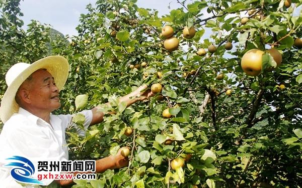 钟山建立特色农业基地20万亩