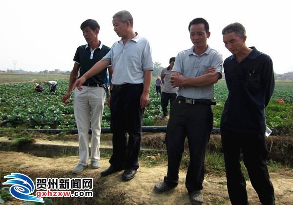 指导群众做好农作物的抢收抢种抢管工作