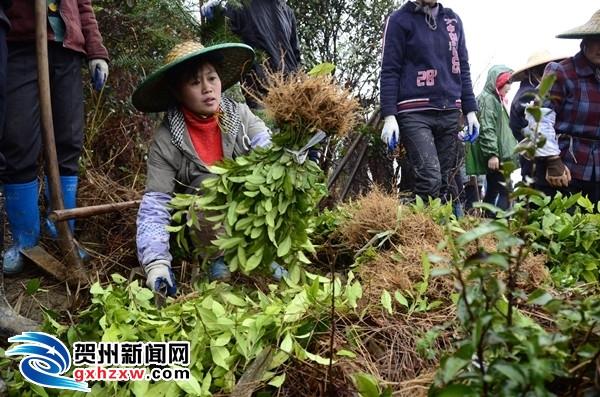 平桂一瑶族村获国务院表彰